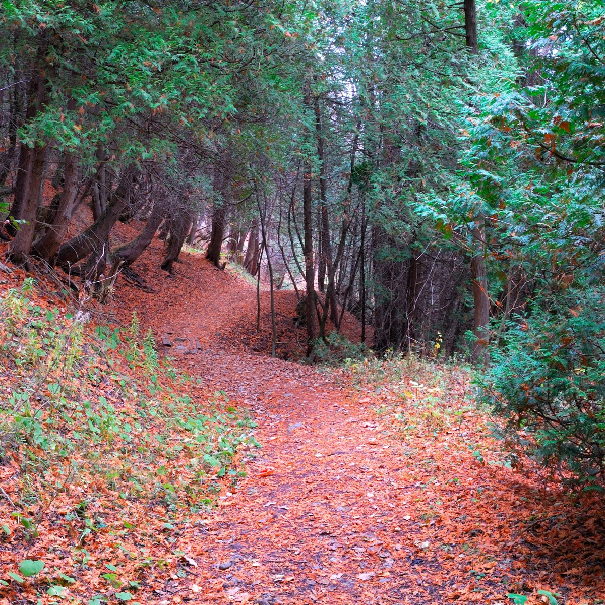 Randonnée en forêt (Photo: yvanbedardphotonature.com)