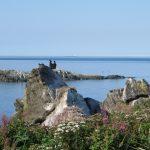 Cormorans aux îles Razade au mois de septembre 2015 (Photo: Réhaume Courtois)