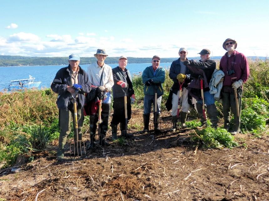 Bénévoles qui déplacent des nids de cormorans aux îles Razade au mois de septembre 2016 (Photo: Gilles Gaboury)