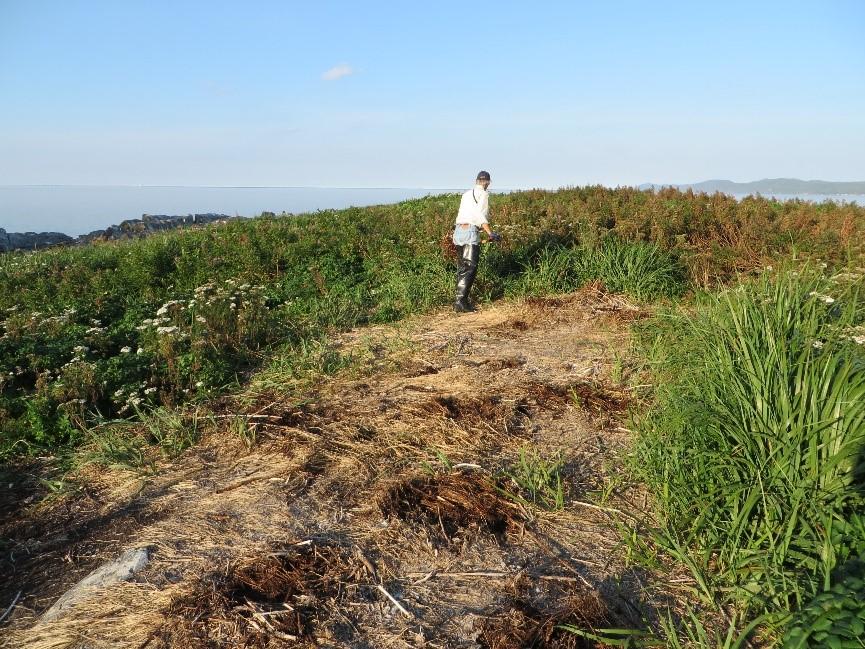 Végétation détruite par la nidifcation des cormorans aux îles Razade (Photo: Réhaume Courtois)