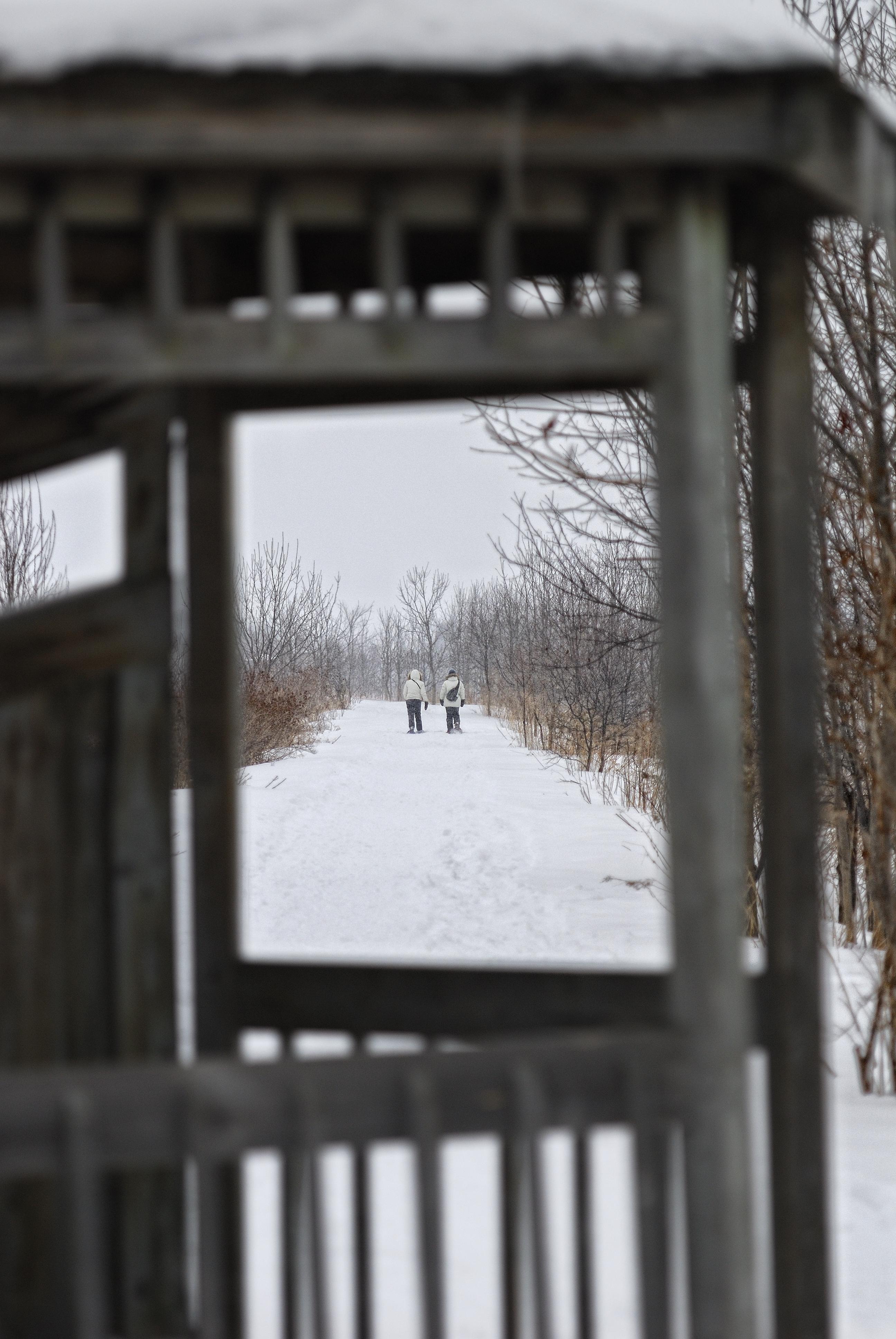 Promenade hivernale sur la digue à la Réserve naturelle du Marais-Léon-Provancher             Crédit photo: Yvan Bédard