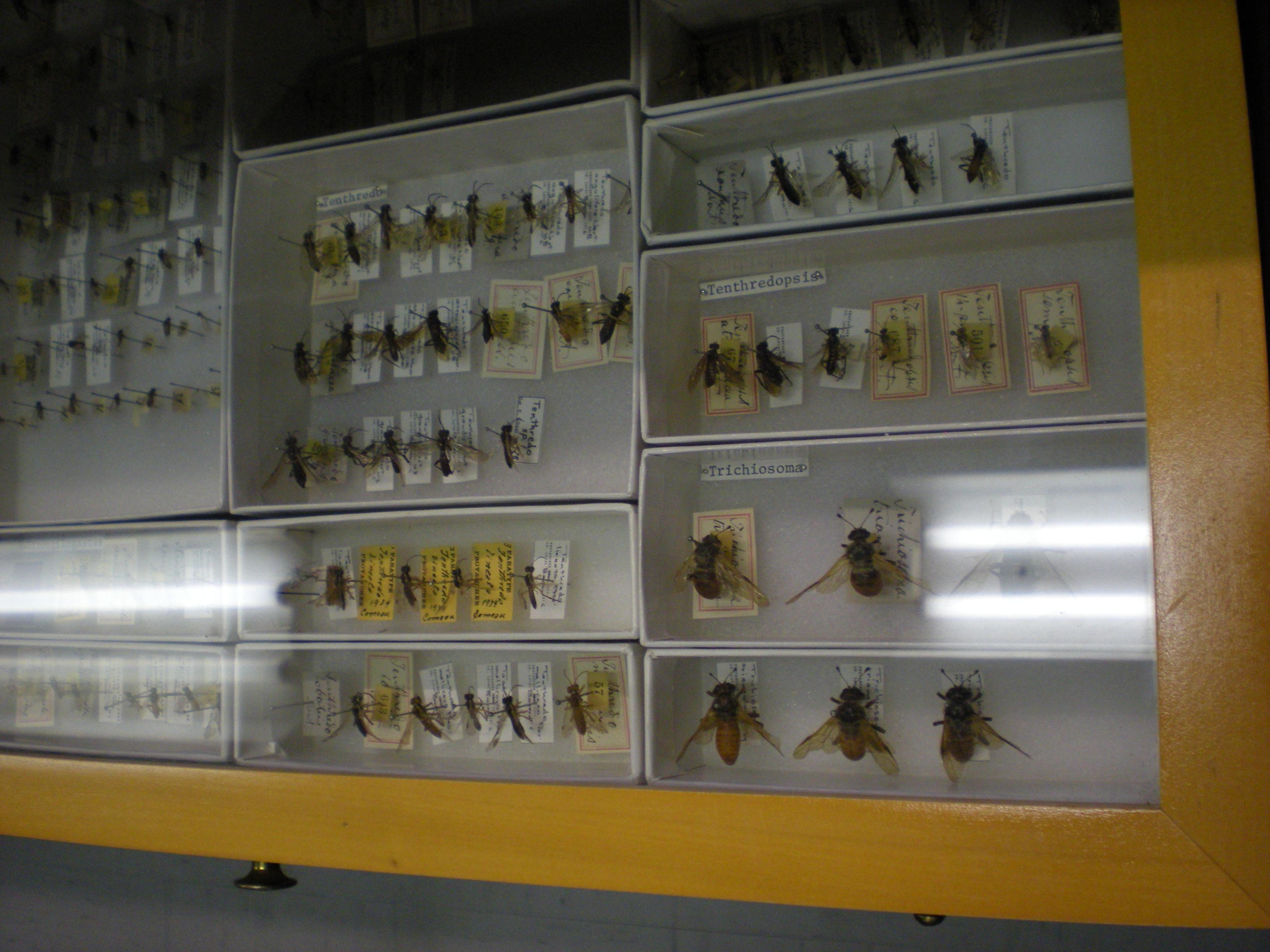 Collection d'insectes à la collection Léon-Provancher, Université Laval