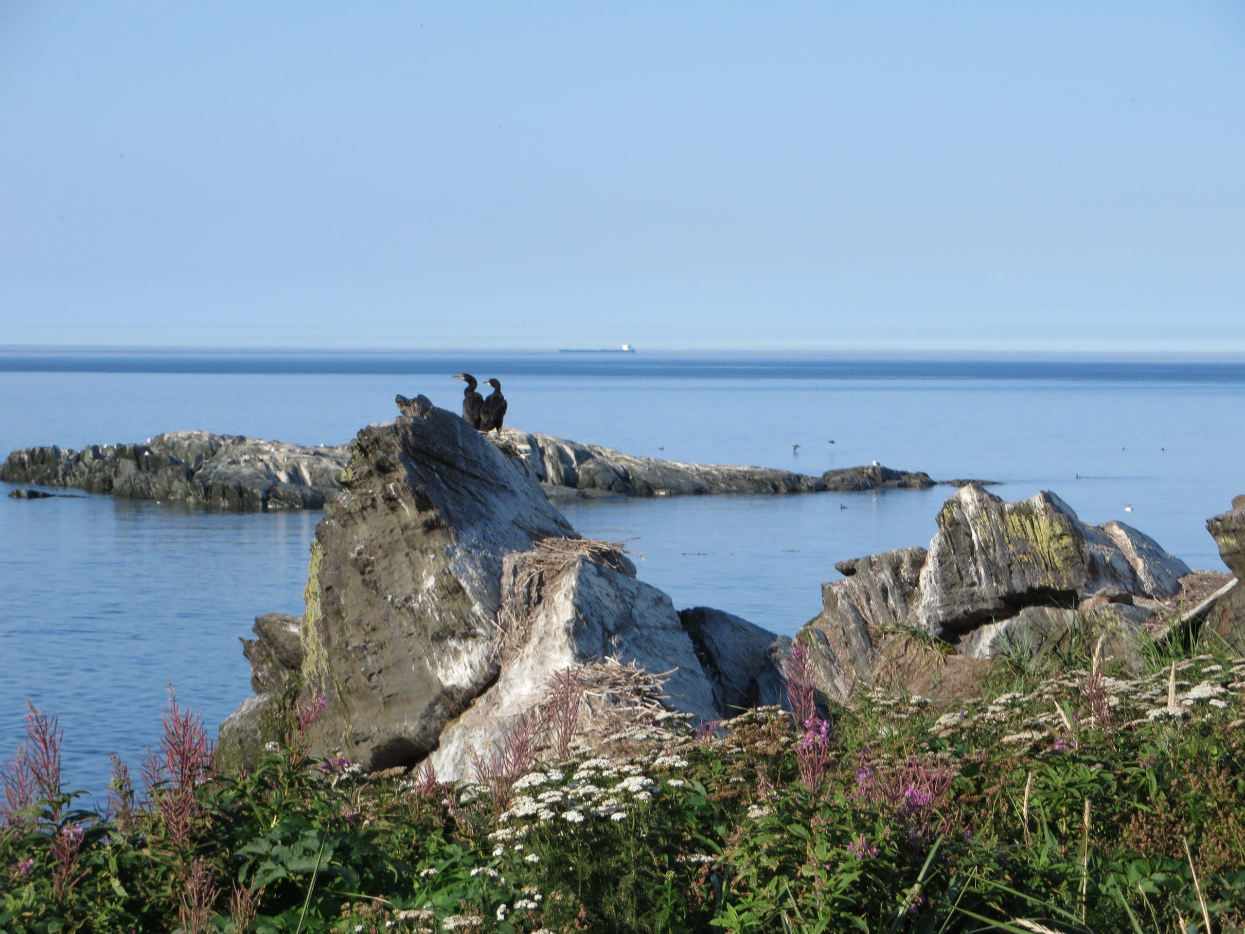 Paysage riverain au Parc naturel et historique de l'Île aux Basques (Photo: Réhaume Courtois)