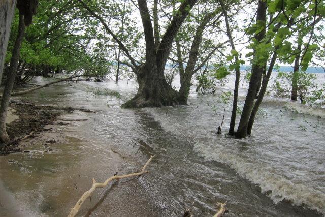 Berge inondée à La Réserve naturelle du Marais-Léon-Provancher le 11 juin 2017 (Photo: Marcel Turgeon)