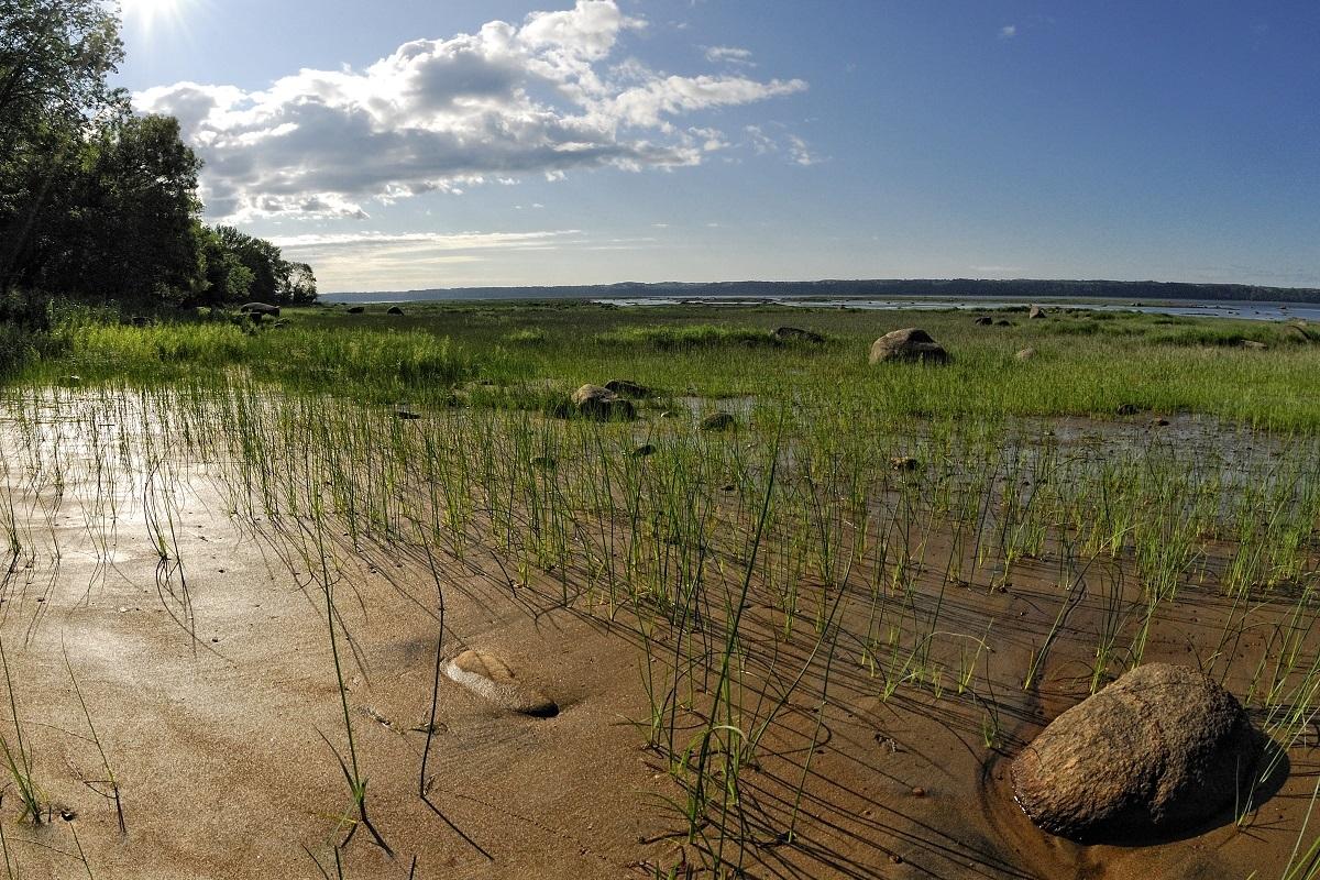 Rivage en été à La Réserve naturelle du Marais-Léon-Provancher