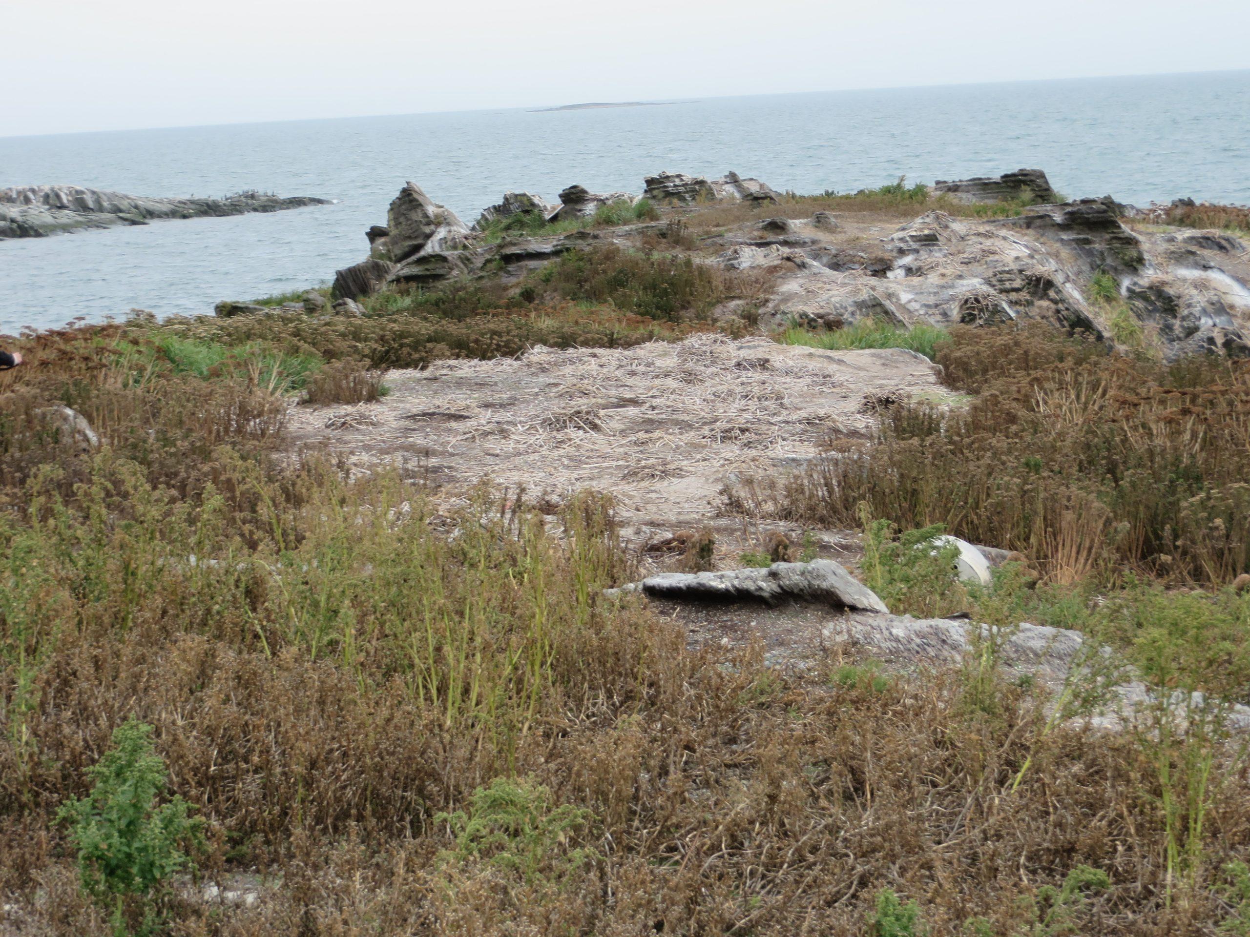 Contrôle du cormoran aux îles Razade, septembre 2017