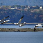 Migration d'automne. Photo: Guy Trencia