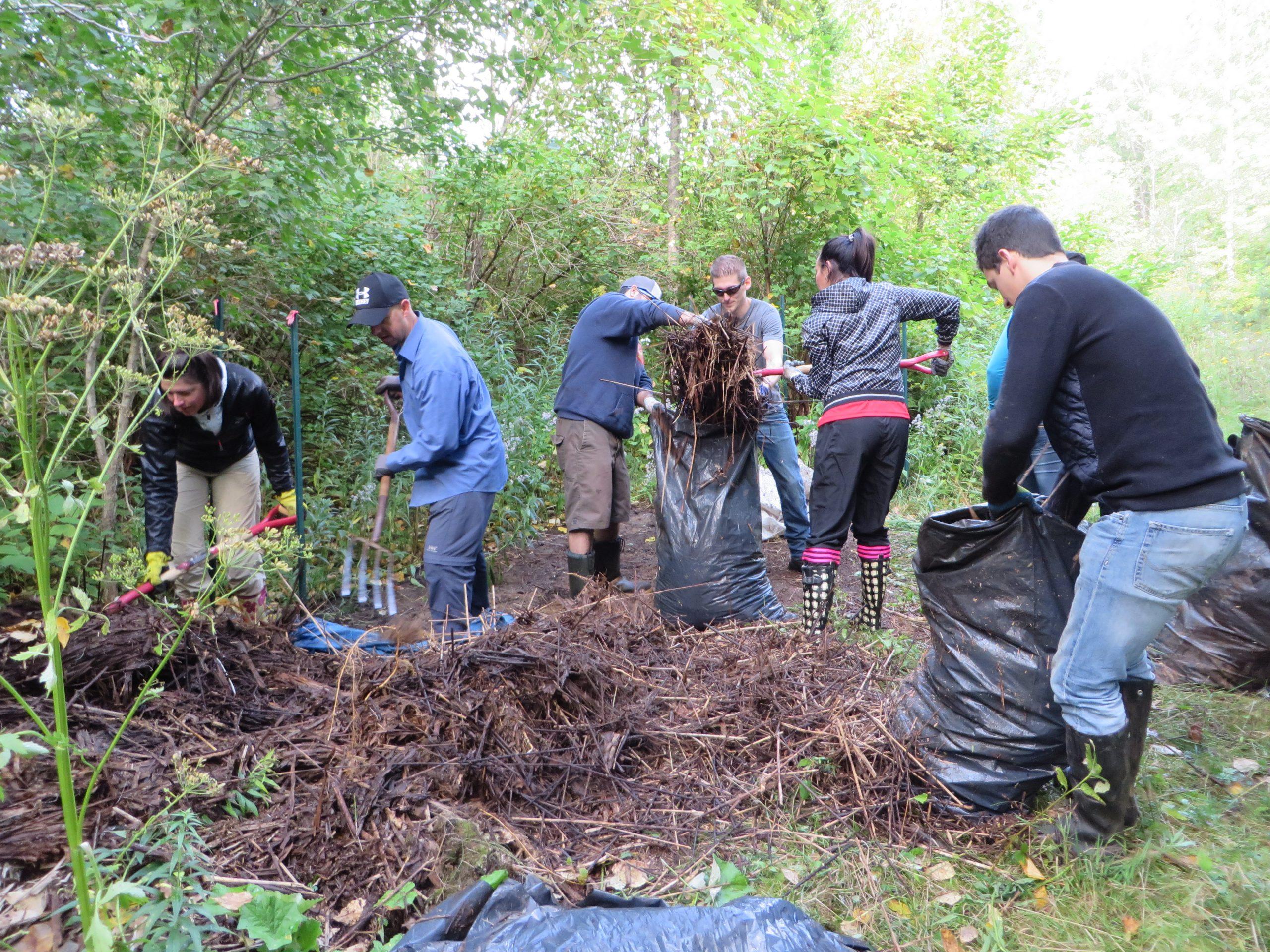 Ensachage de tiges de roseau par des bénévoles d'Intact Assurance. Photo: Réhaume Courtois.