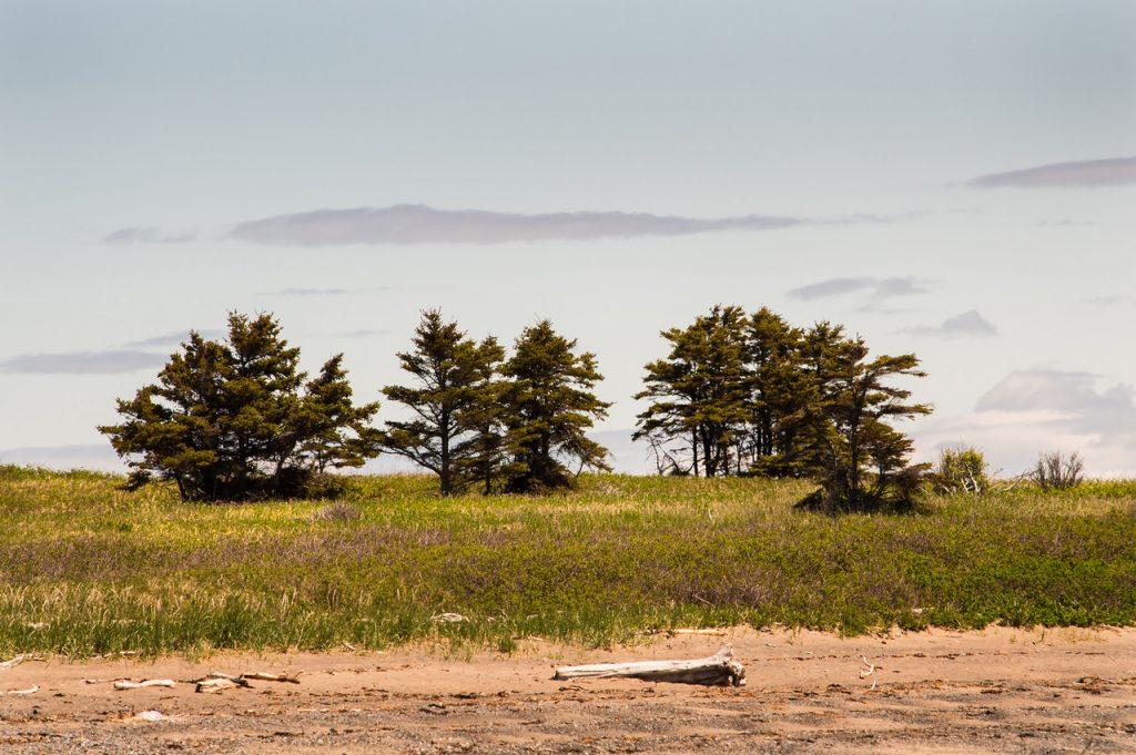Prairie. Crédit photo: Nathalie Renaud