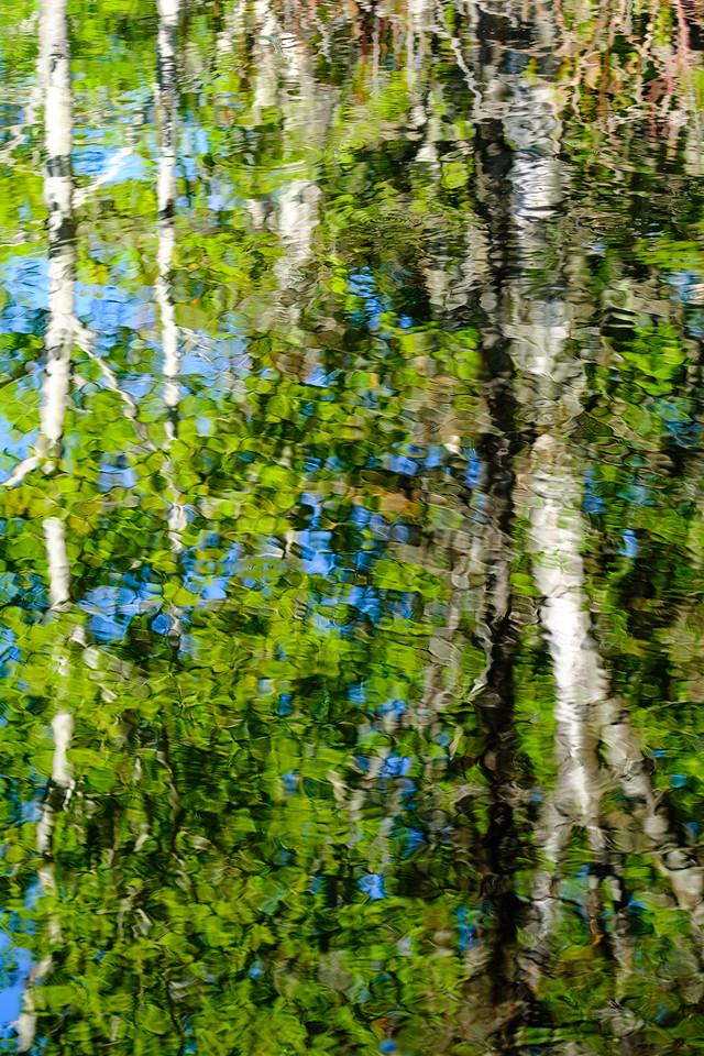 Reflets dans l'étang de l'Île aux Basques. Crédit photo: Guy Boudreau