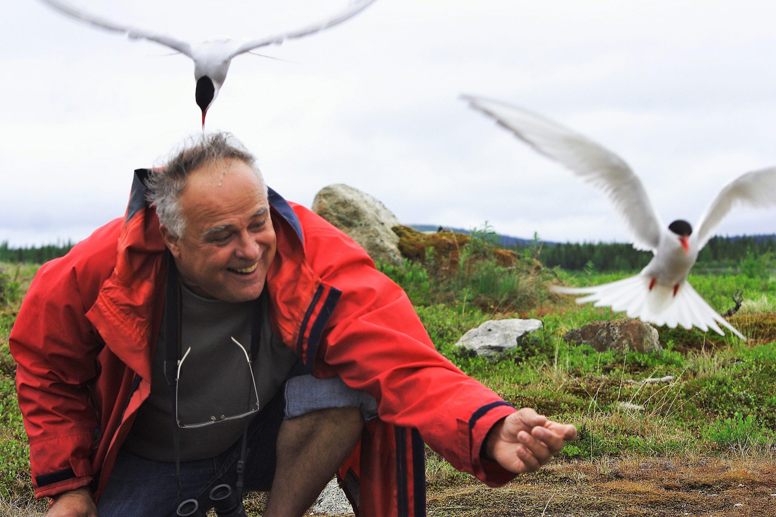 Jean-Luc Desgranges dans une colonie de sternes