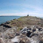 Inventaire des oiseaux marins aux îles Razade, le 27 mai 2018. Photo: Olivier Caron