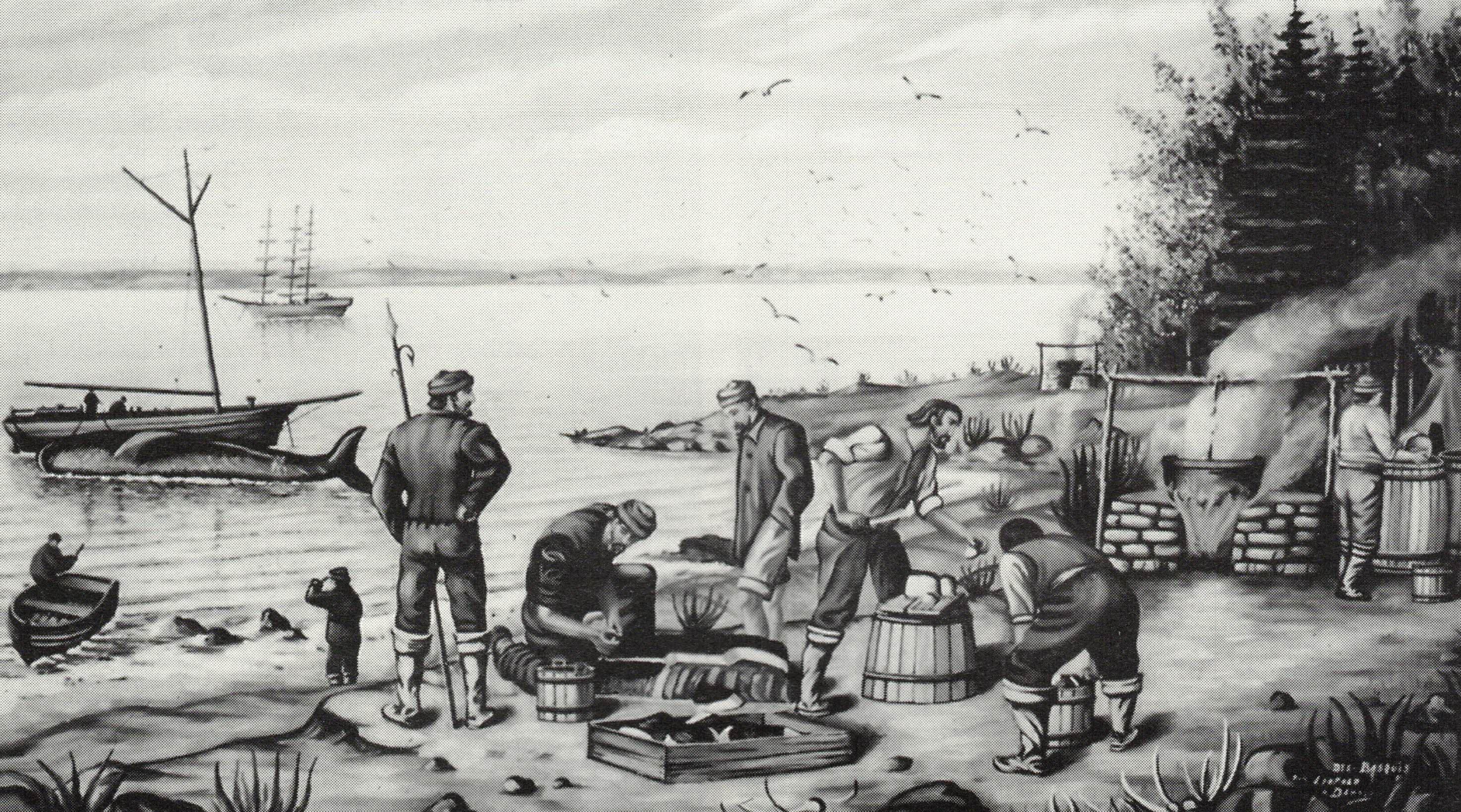 L'Île aux Basques. Société Provancher d'histoire naturelle.