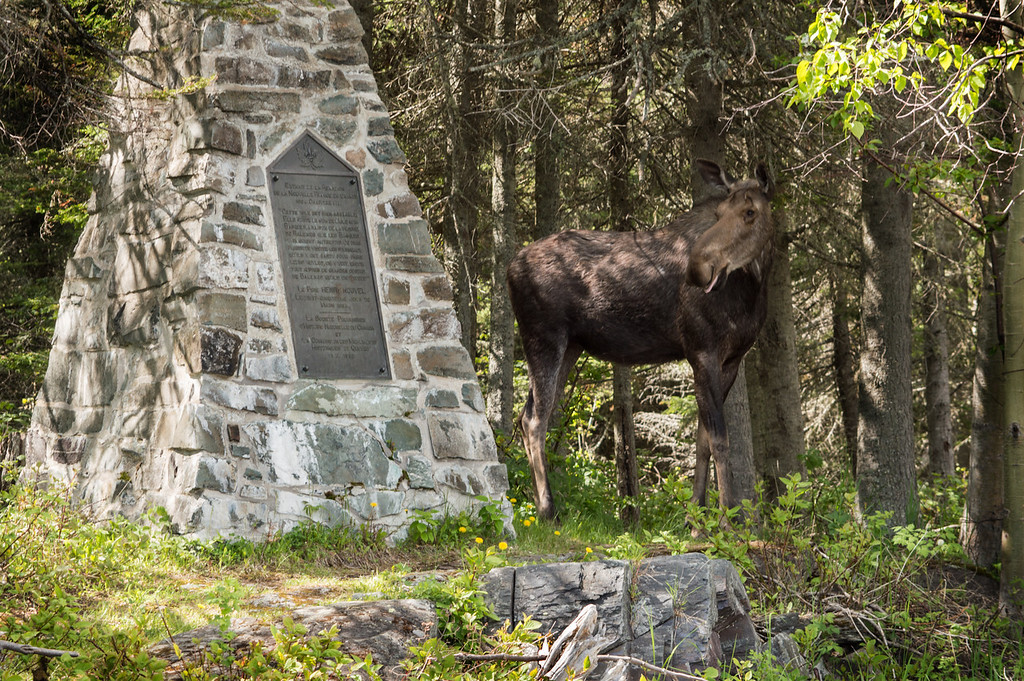 Parc naturel et historique de l'Île aux Basques, juin 2018. Photo: Nathalie Renaud