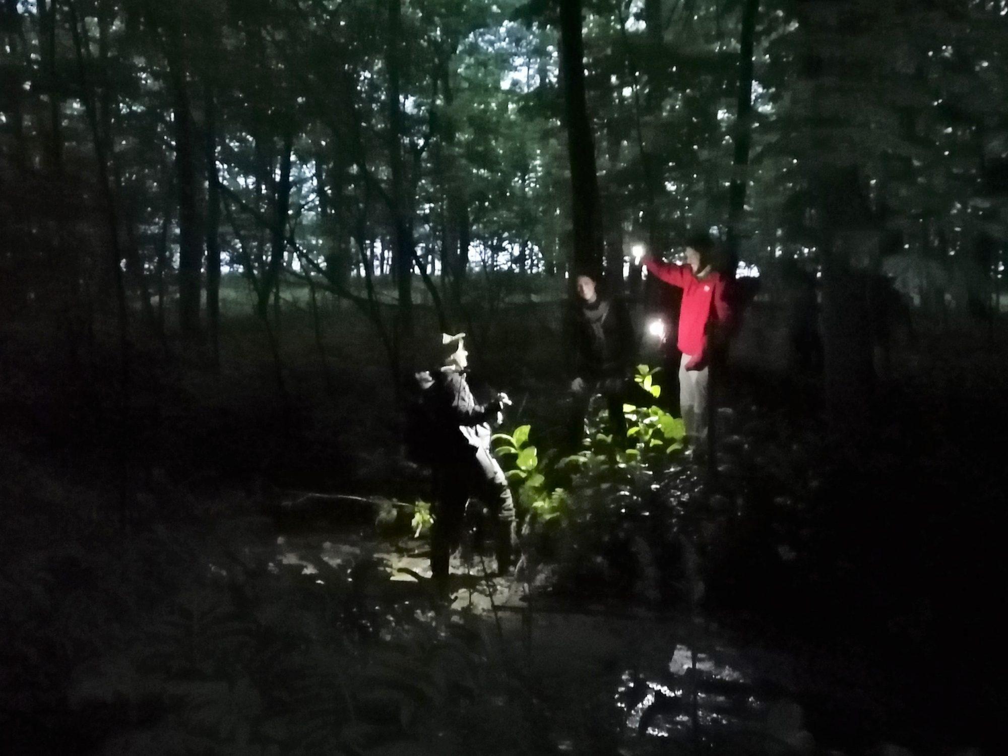 Juillet 2019. Quelques intrépides intéressés aux chiroptères (chauves-souris) lors d'une sortie de nuit au Marais-Léon-Provancher. Photo : Pascale Forget.
