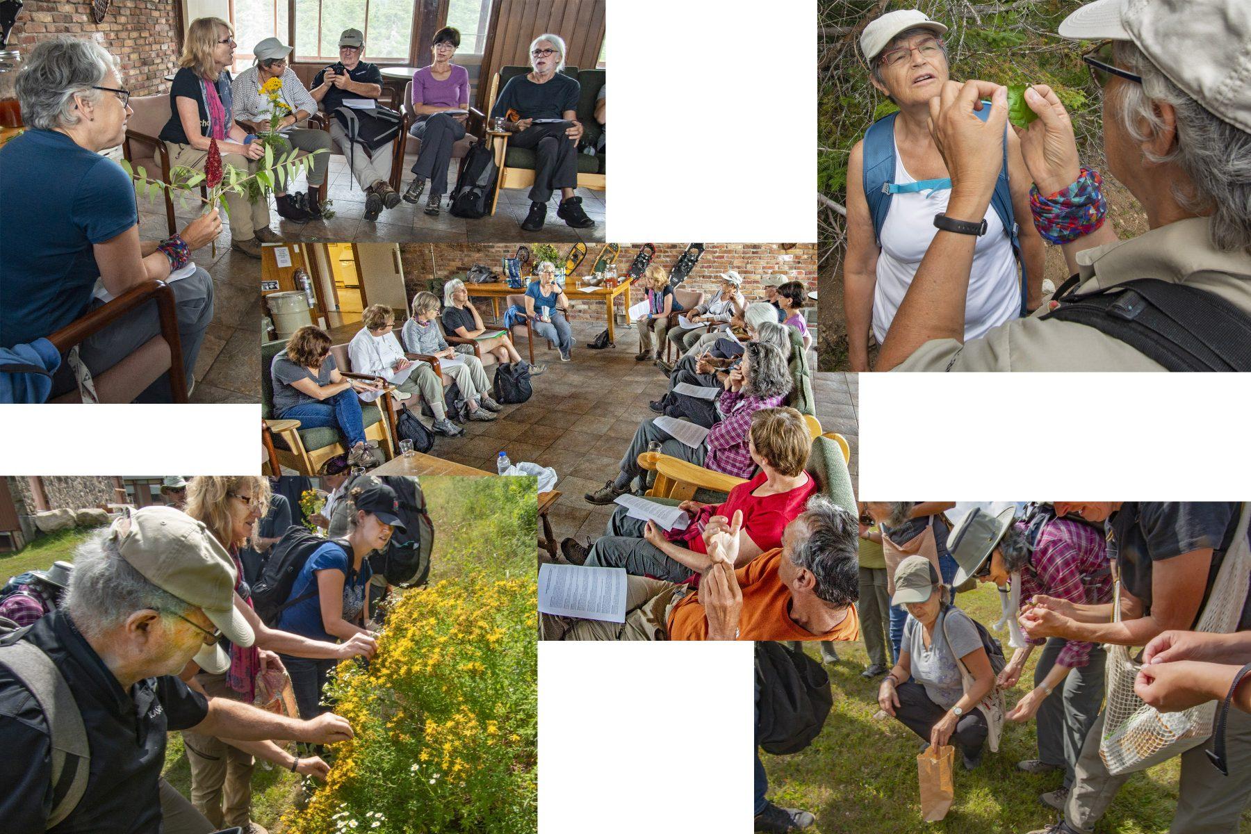 Accueil et préparation des 19 participants à l'atelier sur la cueillette et la cuisine des plantes boréales dans la Forêt Montmorency, les 18 et 19 août 2019.