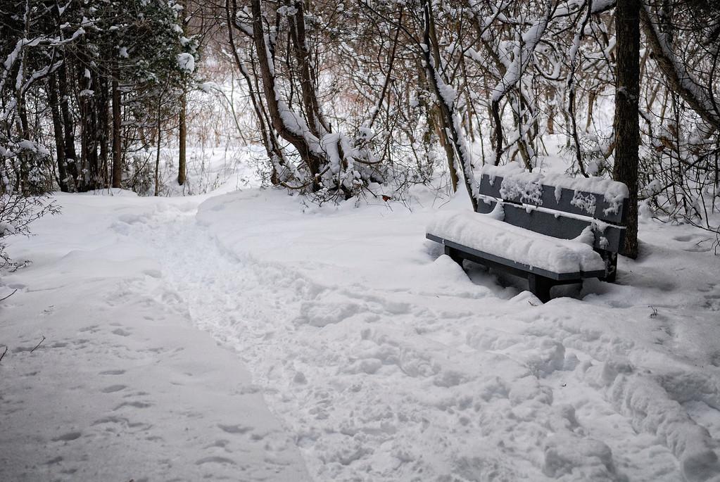 Paysage hivernal dans un sentier bien utilisé de la Réserve naturelle du Marais-Léon-Provancher. Photo : Yvan Bédard