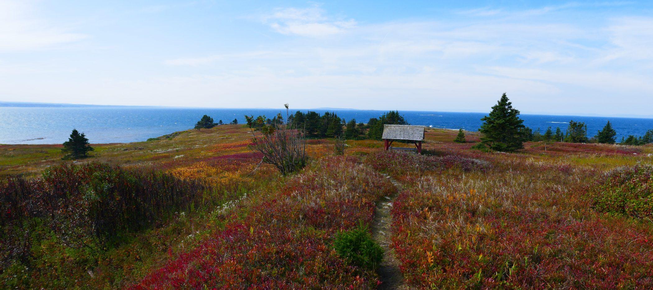 Paysage d'automne à l'île aux Basques, 25 septembre 2019. Prairie de la pointe ouest à marée haute au loin. Photo : Daniel Banville.