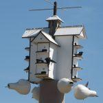 Les hirondelles noires nichent en colonie. La construction et l'installation de nichoirs articificiels facilitent leur nidification. Photo : Guy Trencia.