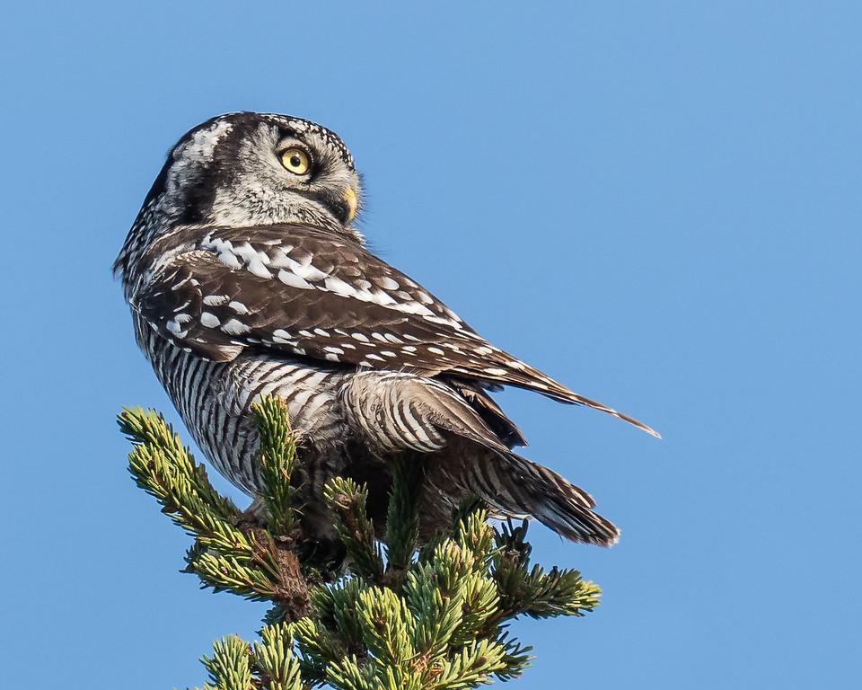 Ornithologie à l'île aux Basques
