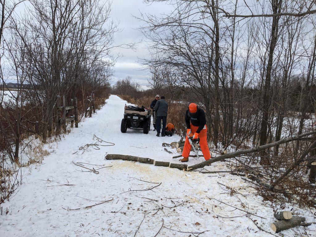 En cette journée de début d'hiver, une équipe de bénévoles s'affaire à l'entretien de la digue le long du réservoir – ou marais – Léon-Provancher. On peut voir ici un aperçu du tronçonnage des arbres abattus par Olivier Drouin.