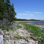 Naturaliste canadien, printemps 2021