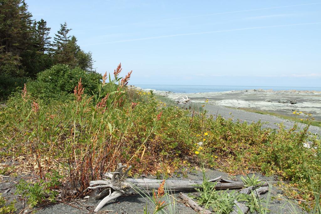 Faire le tour d l'île aux Basques sur la grève parsemée de sable, de pierres, et de végétation est une expérience inoubliable au parc naturel et historique de l'Île-aux-Basques.