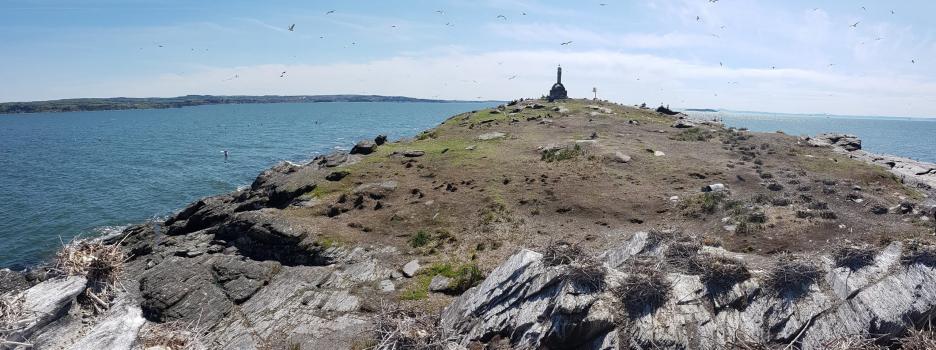 Inventaire des oiseaux marins aux îles Razade par la Société Duvetnor en 2018