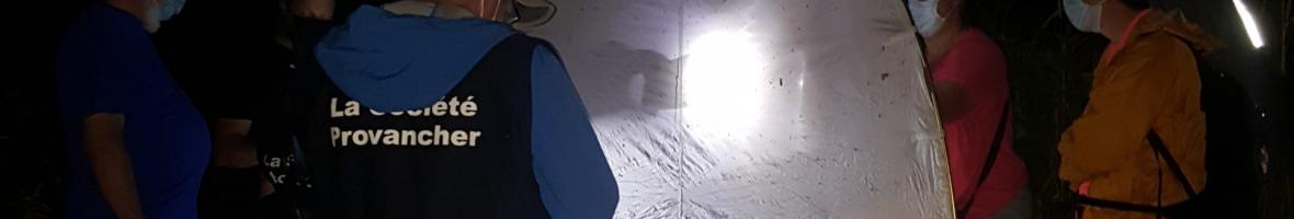 À la découverte des papillons de nuit