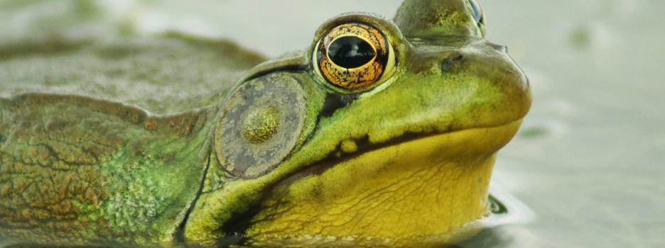 Des vidéos pour le 25e anniversaire de la réserve naturelle du Marais-Léon-Provancher