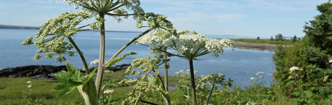 Pharmacologie, drogues et commerce de végétaux en Nouvelle-France