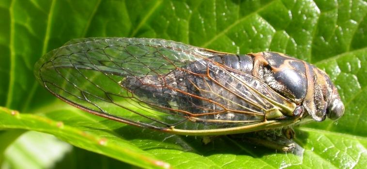 Les insectes… à chacun son trou!