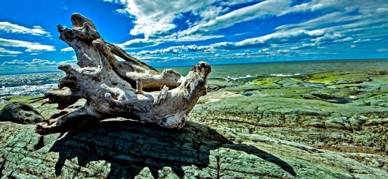 Une bonne saison 2018 au Parc naturel et historique de l'Île aux Basques