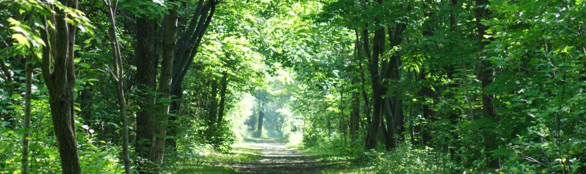 Éloge sensoriel de la réserve naturelle du Marais-Léon-Provancher