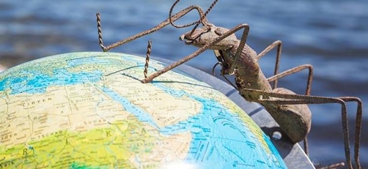 Les fourmis, ces insectes qui mènent le monde