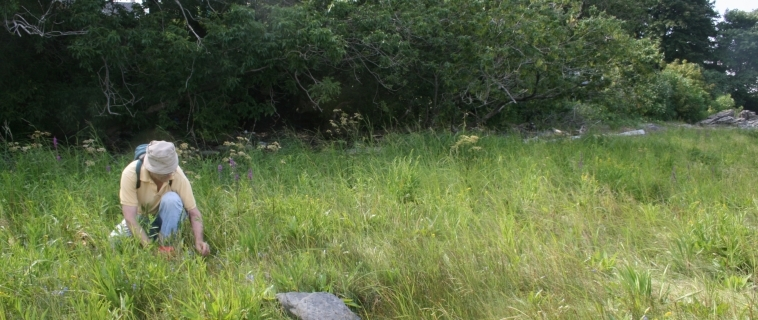Atelier de transfert de connaissances sur les habitats littoraux et la gentiane de Victorin