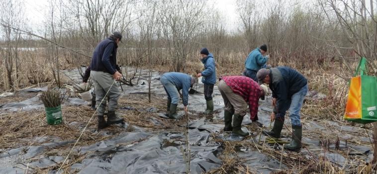 Gestion intégrée du roseau commun à la Réserve naturelle du Marais-Léon-Provancher