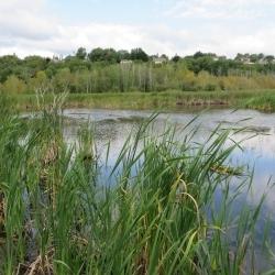 L'avenir de la Réserve naturelle du Marais-Léon-Provancher