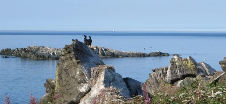 Le contrôle du cormoran à aigrettes aux îles Razade