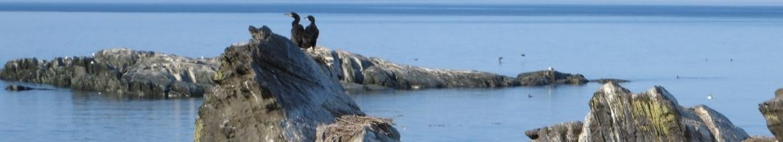 Le contrôle du cormoran aux îles Razade