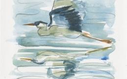 Atelier d'aquarelle à la réserve naturelle du Marais-Léon-Provancher