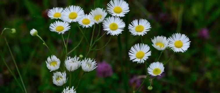 Rendez-vous botanique à la Réserve naturelle du Marais-Léon-Provancher