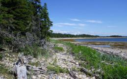 Le Naturaliste canadien, deuxième tranche du numéro de printemps 2021