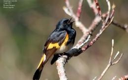 Rapport de baguage des oiseaux à l'île aux Basques, saison 2017