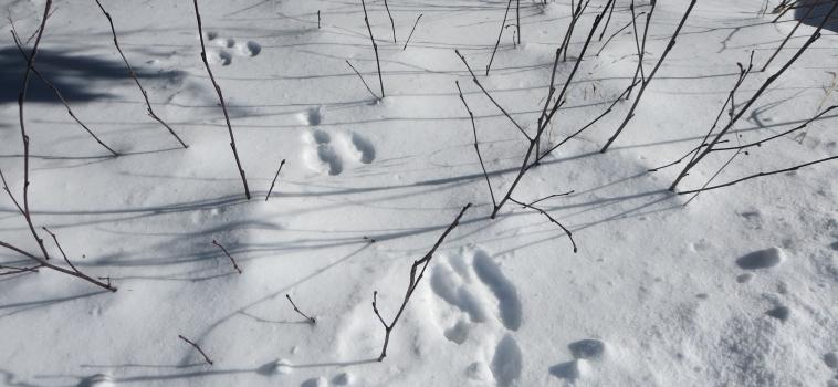 « Hibernation ou hivernation? »