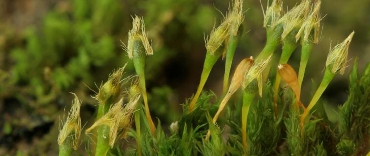 Initiation aux bryophytes à la Réserve naturelle du Marais-Léon-Prévancher