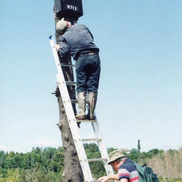 Installation de nichoir à chauve-souris
