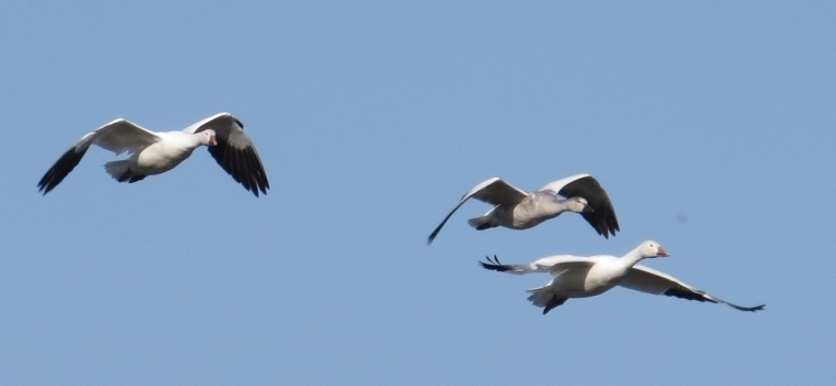 Les migrations printanières en photo