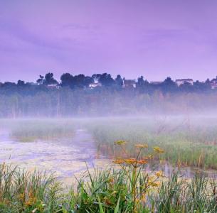 Brouillard à la Réserve naturelle du Marais-Léon-Provancher (Photo: yvanbedardphotonature.com)