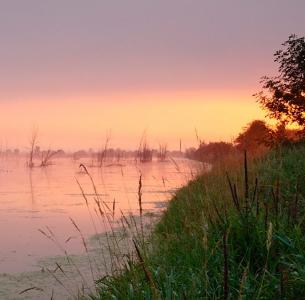 Brouillard matinal à la Réserve naturelle du Marais-Léon-Provancher (Photo: yvanbedardphotonature.com)